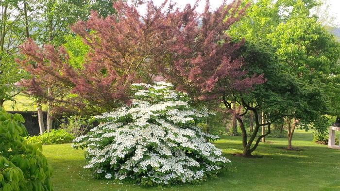 Journées du patrimoine 2019 - Découverte du patrimoine naturel et botanique de Lorraine