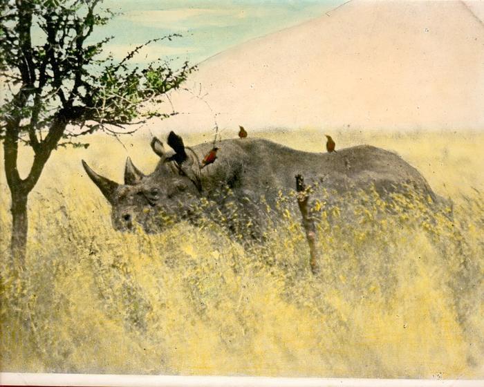 Journées du patrimoine 2019 - Émile Gromier et la protection de la faune africaine