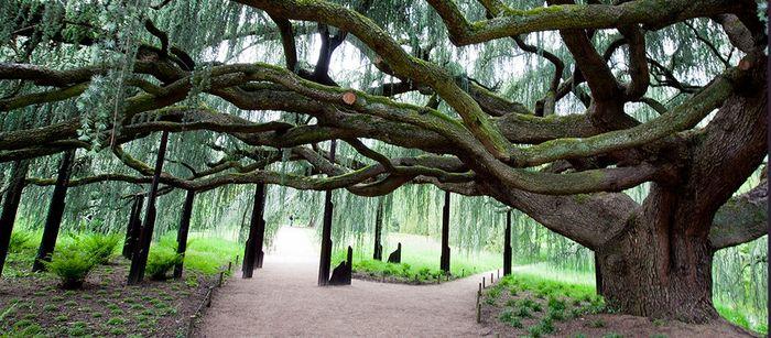 Journées du patrimoine 2019 - Visites à l'Arboretum de la Vallée-aux-Loups