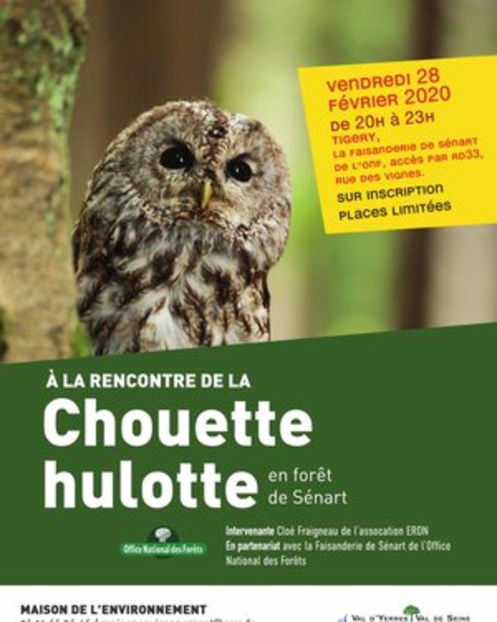 A la rencontre de la Chouette hulotte en forêt de Sénart