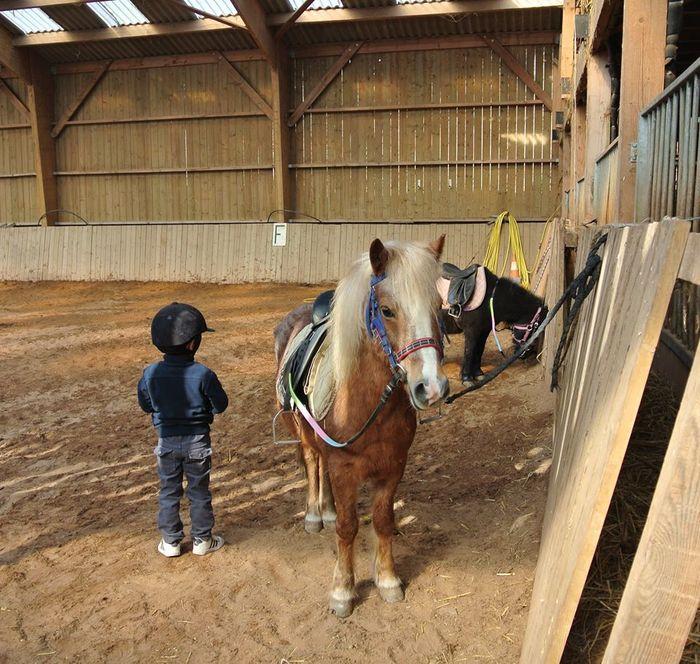 Des vacances apprenantes  en pleine nature, au cœur d'une vraie ferme, pour que tu deviennes pro de l'équitation en respectant  l'animal et les règles de vie de la colo