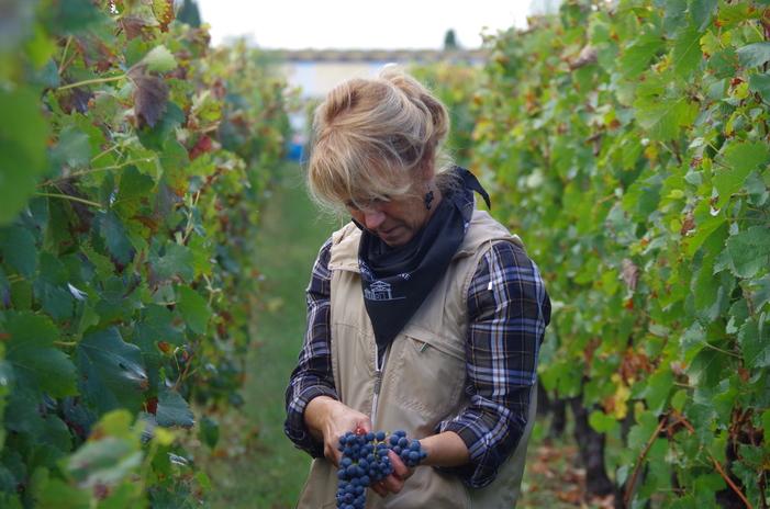 Journées du patrimoine 2020 - Fête des vendanges au lycée viticole : récolte manuelle, ateliers, repas vignerons, visites du chai !