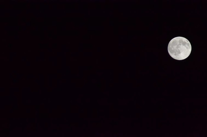 Balade naturaliste: Les chauves-souris, l'Homme et la nuit