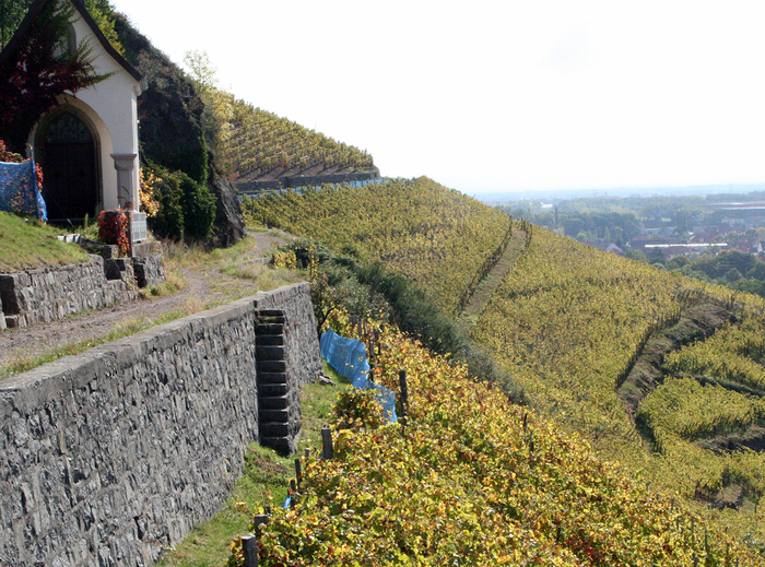 Journées du patrimoine 2019 - Découverte du vignoble du Rangen