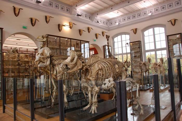 Journées du patrimoine 2019 - Visite libre du musée Fragonard de l'École vétérinaire de Maisons-Alfort