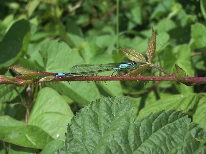 Balade naturaliste à la rencontre des libellules et demoiselles