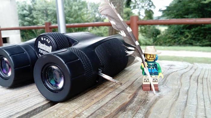 Initiation à l'ornithologie