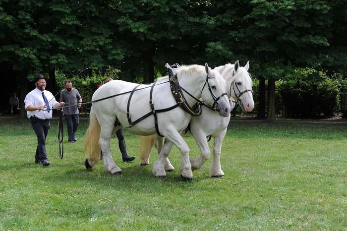 Les amis du cheval