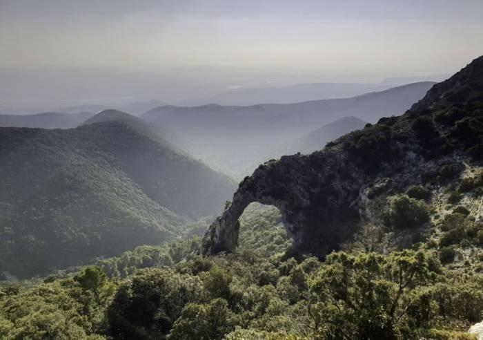ANNULATION : Forêt de cèdres à Bonnieux (Luberon)  et conservatoire des terrasses de culture à Goult