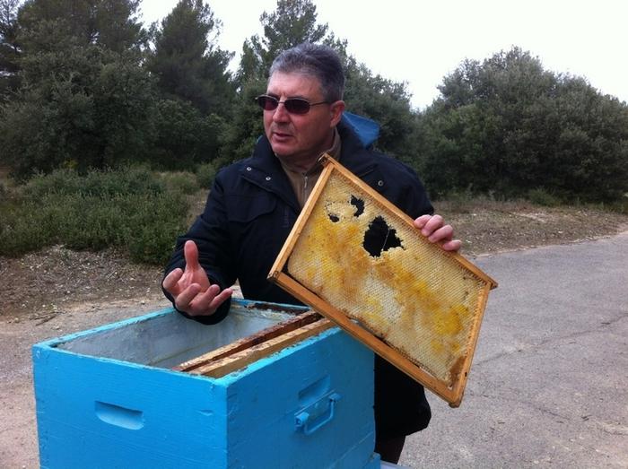 Journées du patrimoine 2020 - Annulé | Visite des ruches de Gardanne