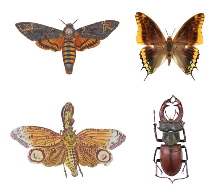Journées du patrimoine 2019 - Histoires d'insectes