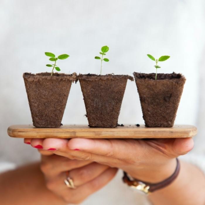 Malignes les plantes !  Les secrets des végétaux