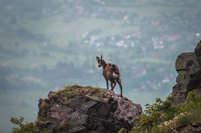 Journées du patrimoine 2020 - Atelier d'initiation à la photographie de paysage au Hartmannswillerkopf avec Vincent Schneider