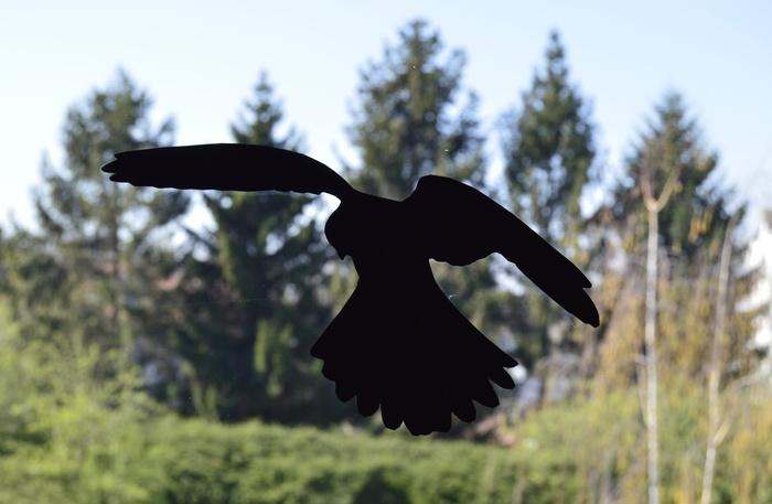 Pause Nature : silhouettes anticollision