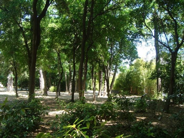 """Journées du patrimoine 2019 - """"Petits secrets autour des arbres du Parc Magnol..."""""""