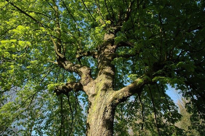 Balade naturaliste : L'arbre et les 4 éléments