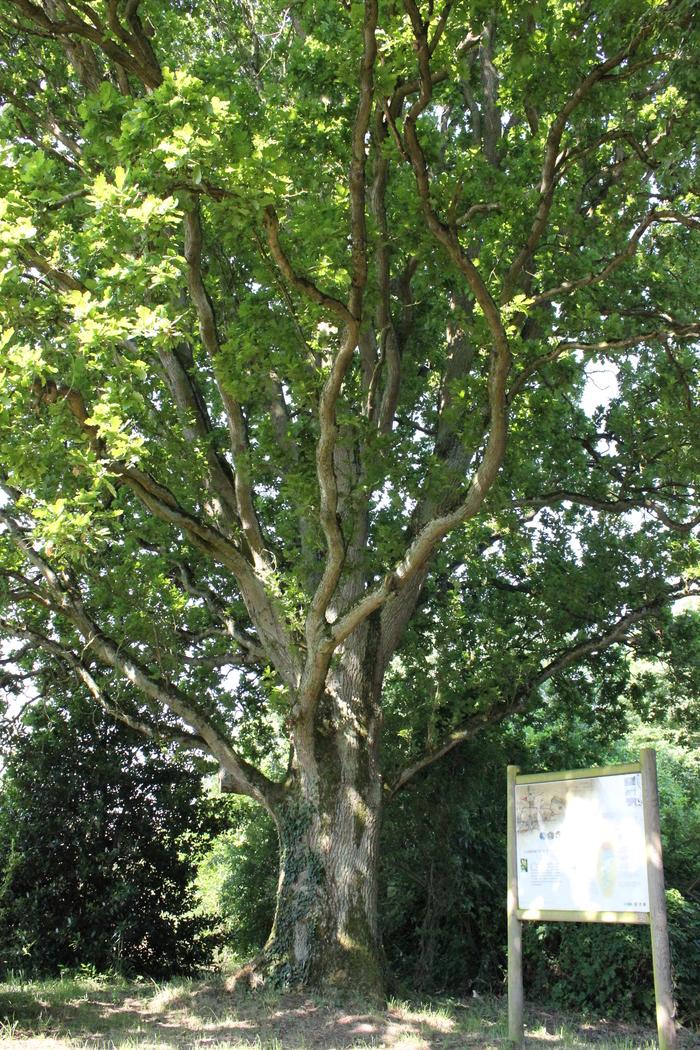 Journées du patrimoine 2019 - Voyage au cœur des arbres