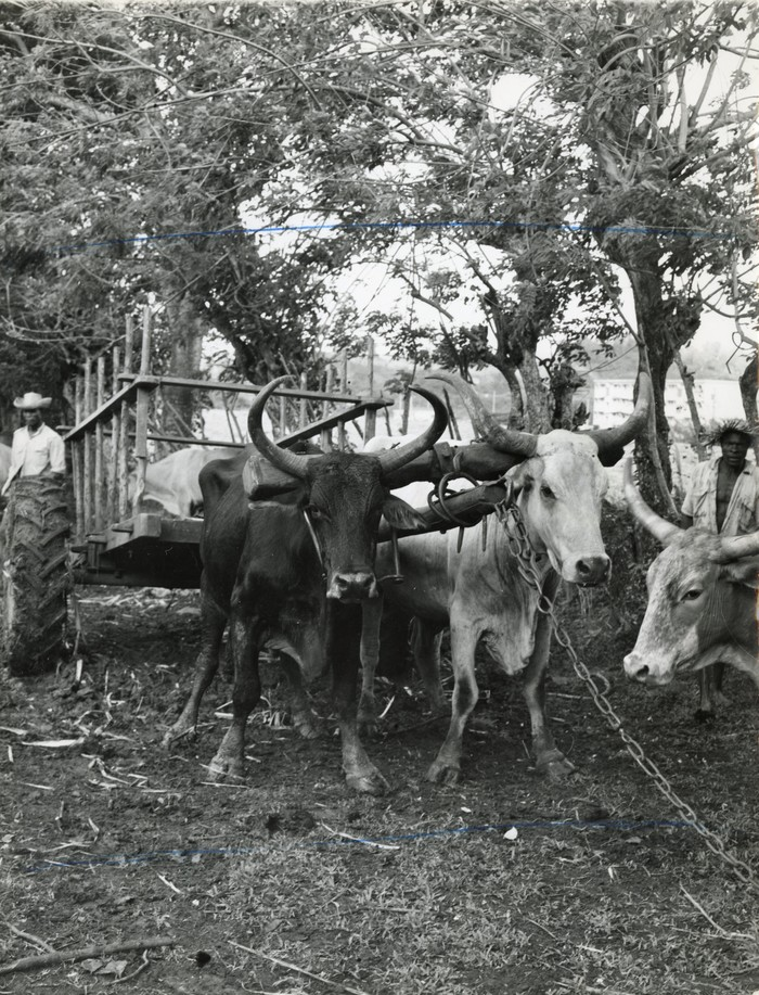 Journées du patrimoine 2020 - Les Trois-Ilets / A la découverte de la vwa bèf