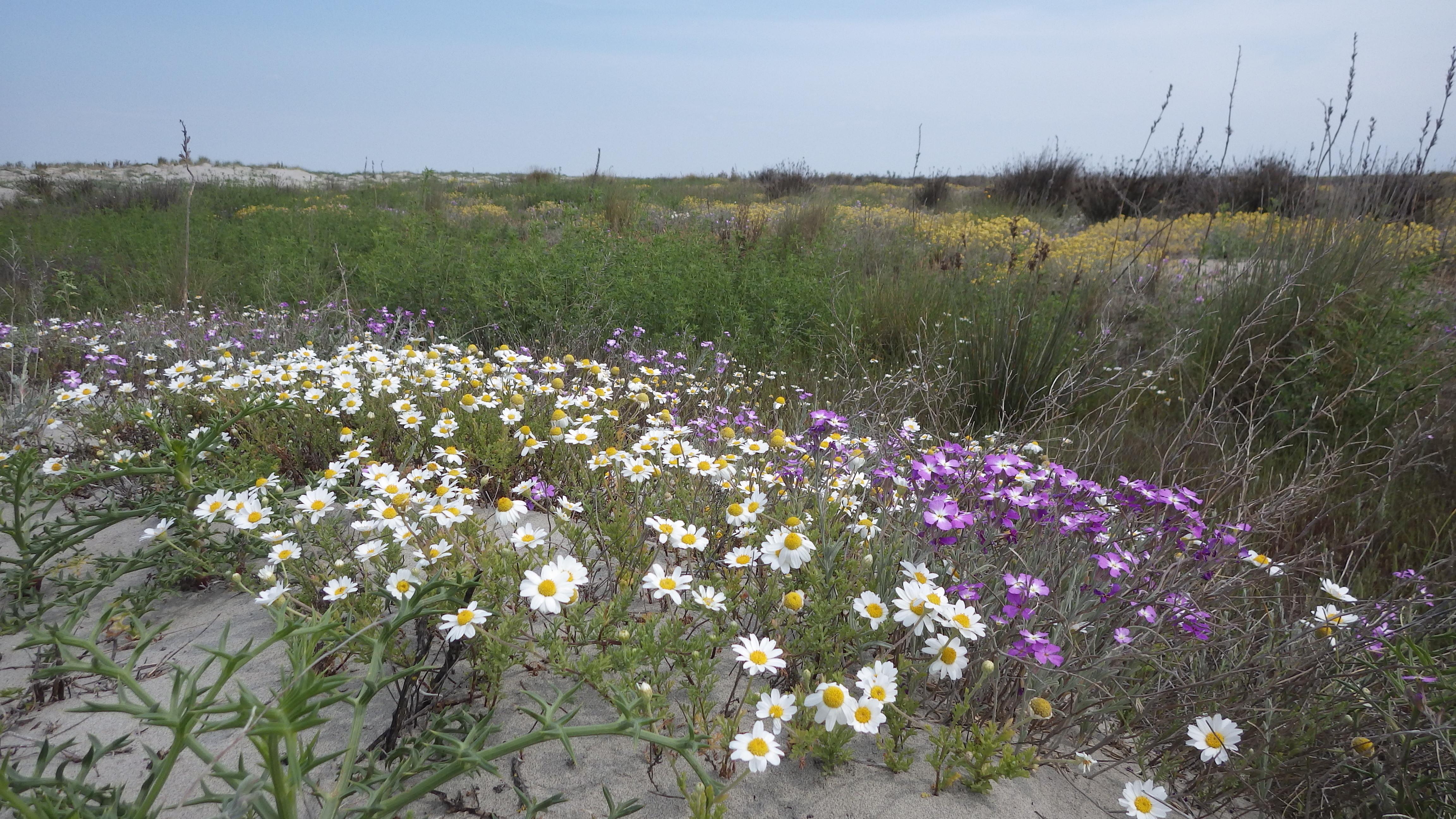 Une belle matinée vous attend à la découverte des superbes dunes de la Réserve naturelle de Camargue, de la flore et de la faune de ces lieux d'exception.