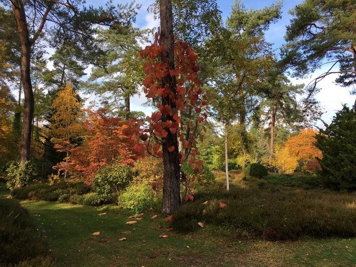 Visites guidées à 15h         Au delà encore de leur beauté automnale, chaque arbre a son histoire et ses petits secrets. Venez en découvrir quelques-uns et vous émerveiller !