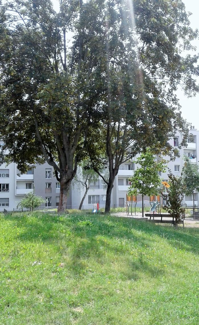 Journées du patrimoine 2020 - Balade nature au cœur du quartier de Hautepierre