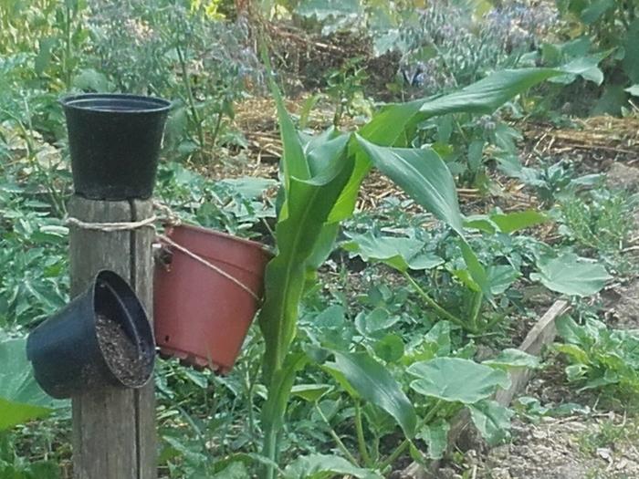 Faire ses semis à l'automne pour savourer de bons légumes d'hiver