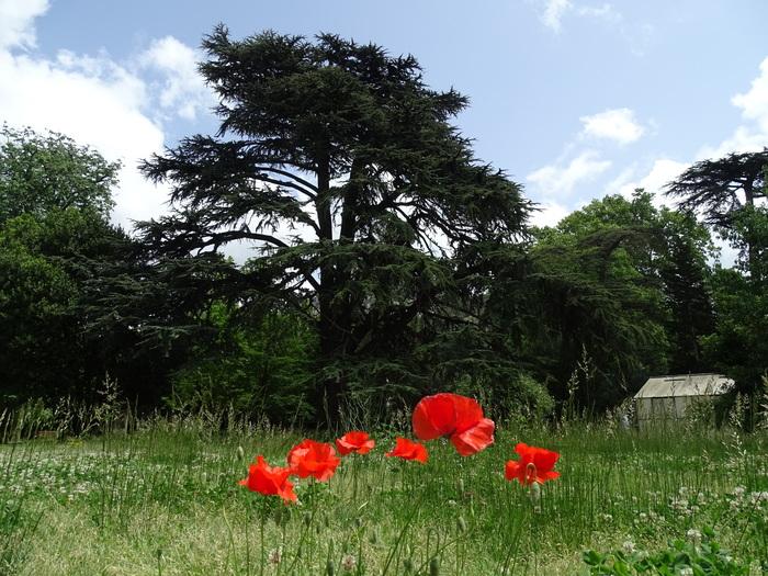 Journées du patrimoine 2020 - Visites découvertes : Le Jardin départemental du Las, un tableau en mouvement