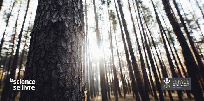 Atelier : Planter des forêts