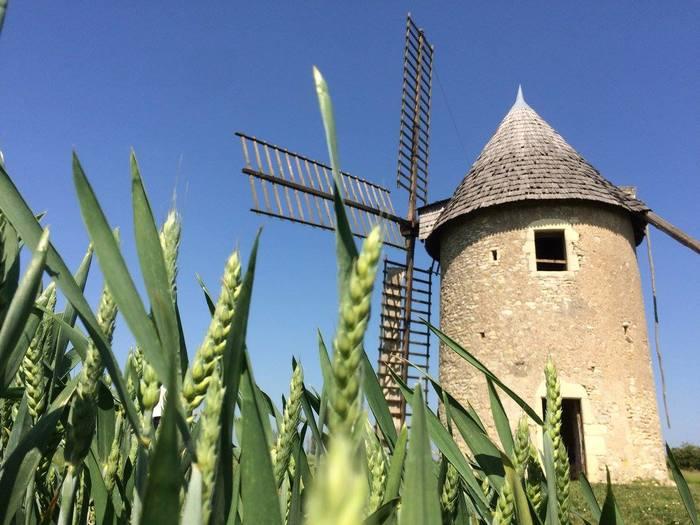 Journées du patrimoine 2019 - Découverte du dernier rescapé des moulins à vent de la Vienne et de la ferme culturelle de Cherves.