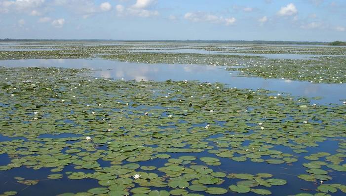 Journées du patrimoine 2020 - Flore de Grand Lieu, découverte de l'Herbier Cailleteau, 40 ans de la réserve naturelle nationale du lac de Grand Lieu