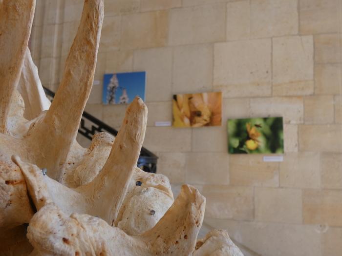 Journées du patrimoine 2019 - Visite libre du muséum du Havre