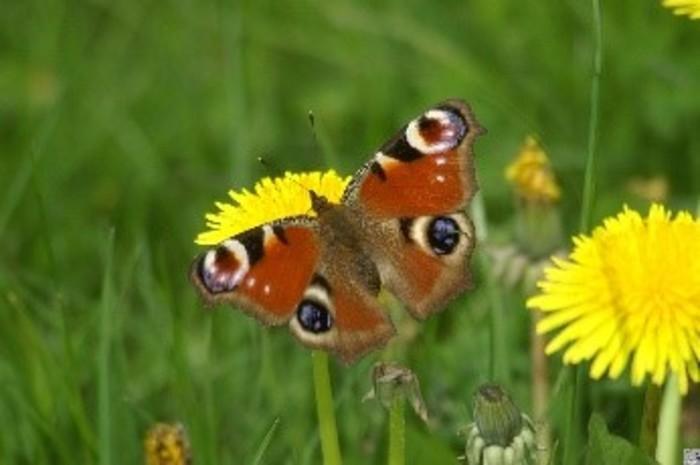 Balade naturaliste : les 7 grandes familles d'insectes