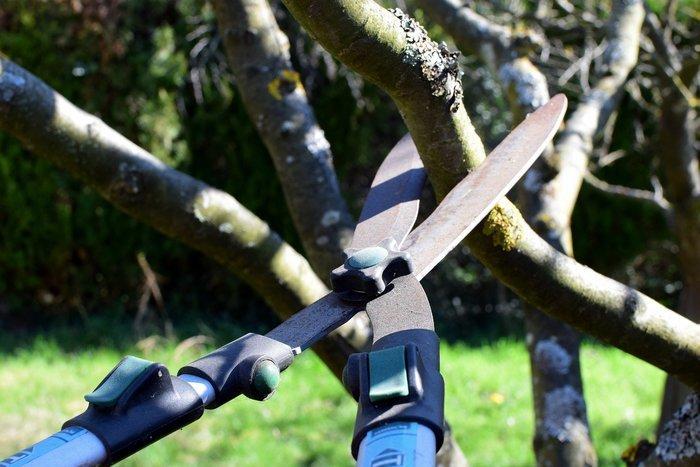 Apprenez à tailler vos arbres et arbustes dans le respect du végétal : observer, choisir, et accompagner leur croissance.