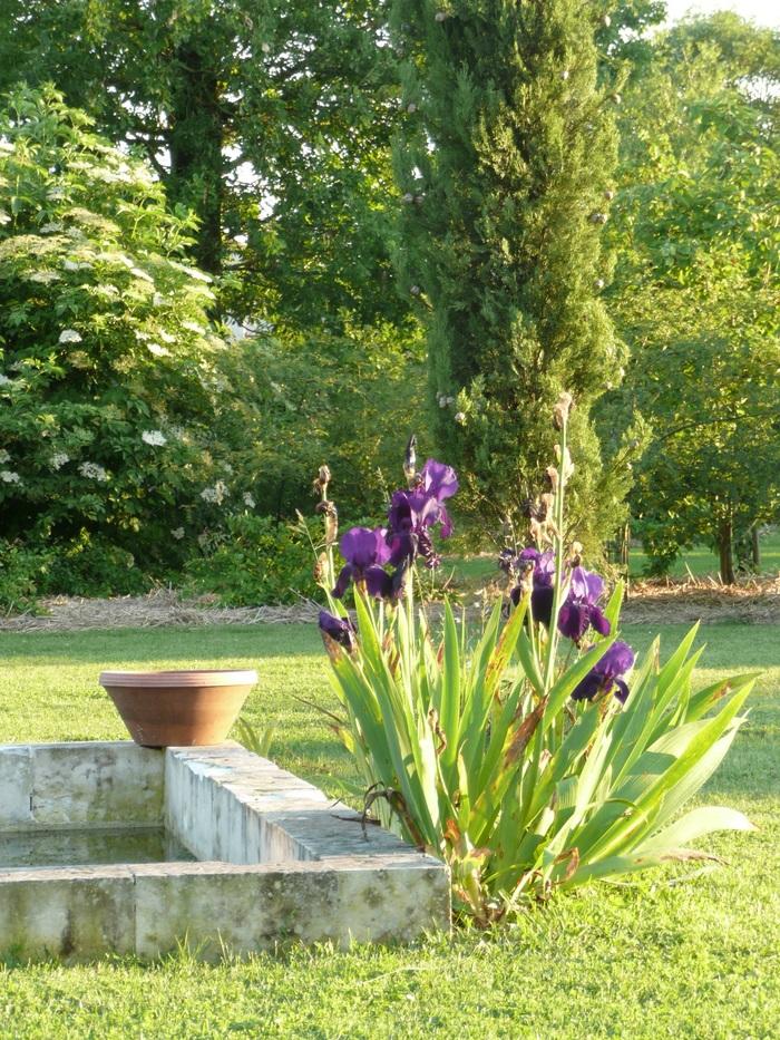 Journées du patrimoine 2020 - Visite contée du jardin