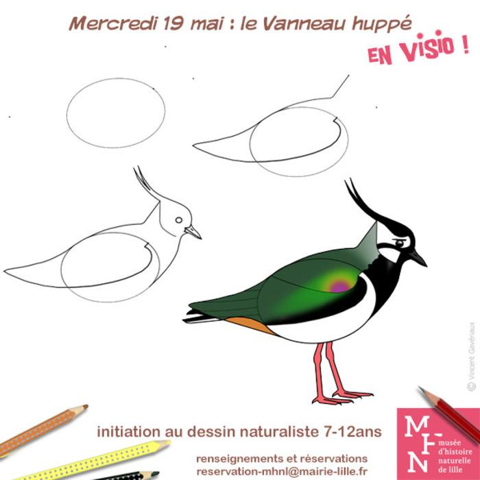 Atelier dessin en visio : Le Vanneau huppé !
