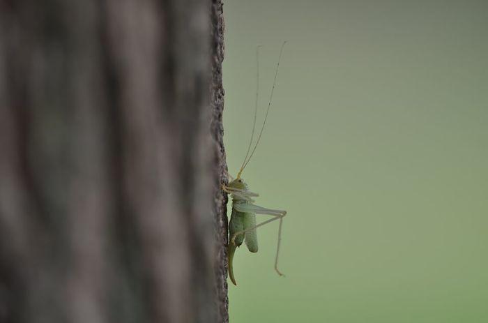 Zoom sur les criquets et les sauterelles