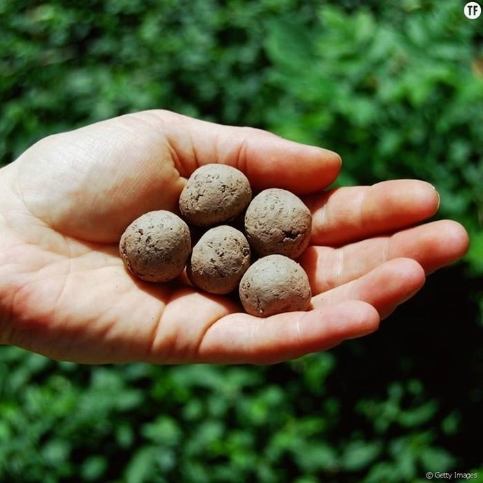 Bombes à graines avec Les Petits Débrouillards