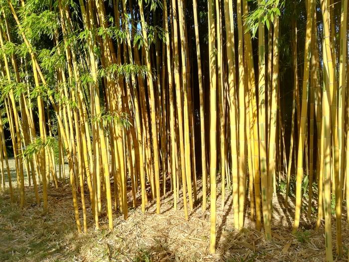 Journées du patrimoine 2020 - Annulé | Jardin Bambous en Provence