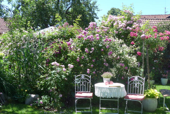 Gartenspaziergang durch einen Privatgarten. Geschichten und Gartenanekdoten aus dem Gärtnerleben.