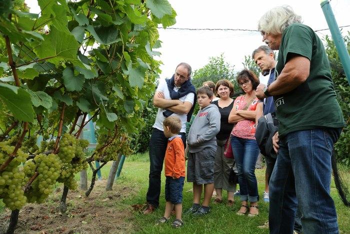 Journées du patrimoine 2020 - Le Côteau du Braden : de la vigne au vin