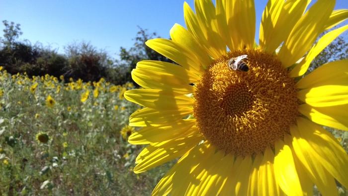 Journées du patrimoine 2019 - Journée Patrimoine Sol & Biodiversité