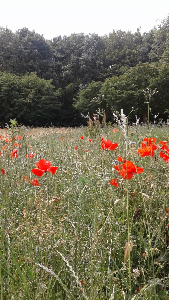 Journées du patrimoine 2020 - Balade nature au cœur des quartiers des Poteries et du Hohberg