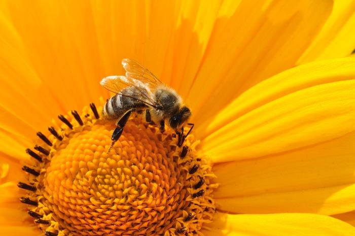 Journées du patrimoine 2019 - Découverte de l'apiculture
