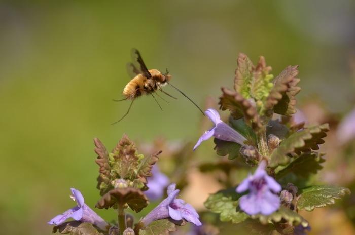 Balade naturaliste : plantes et pollinisateurs, un couple inséparable !