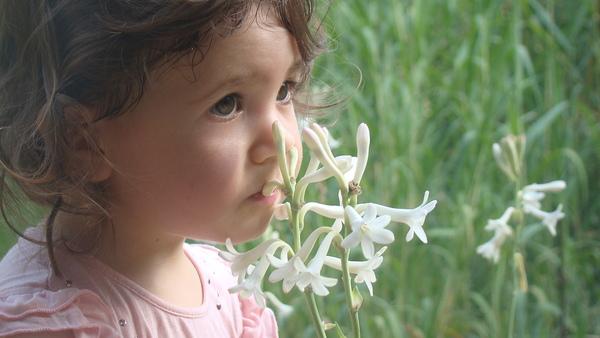 Découverte des plantes à parfum et des oliviers du Pays de Grasse