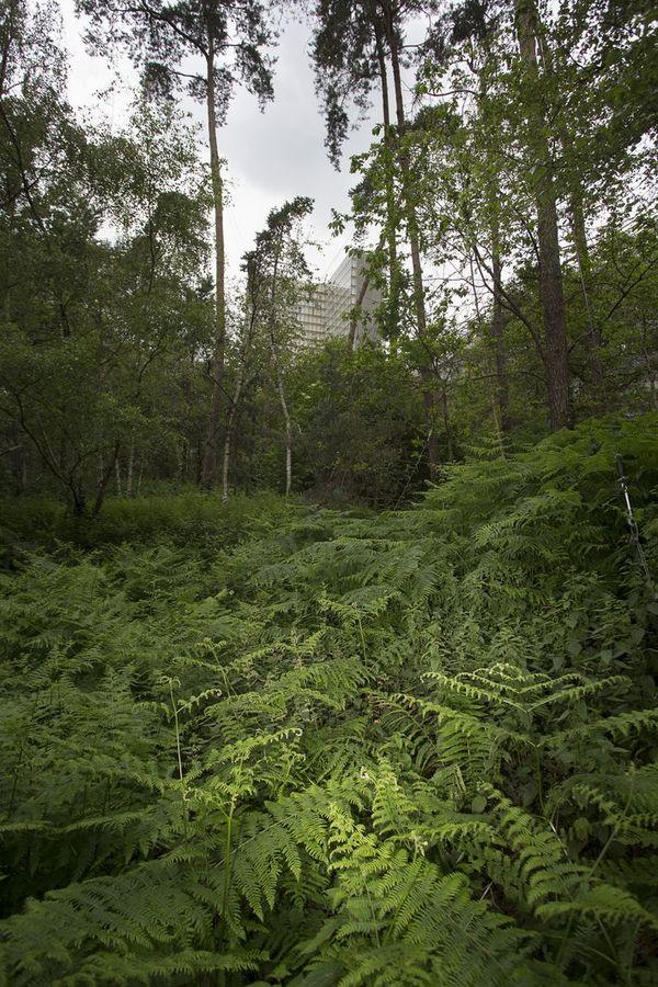 Visite du jardin forêt