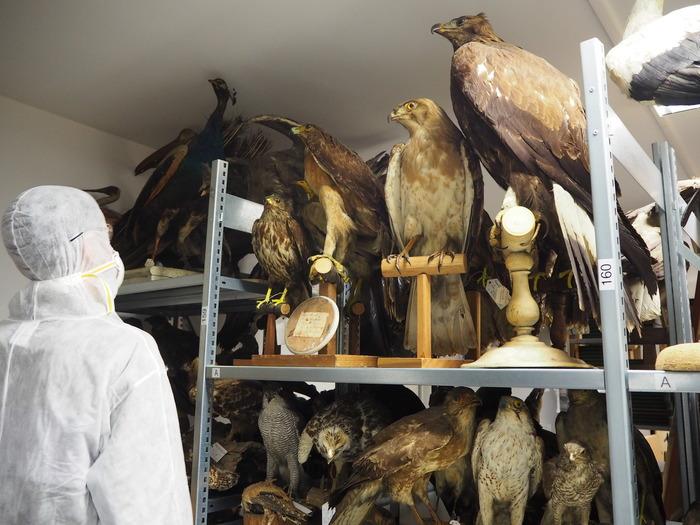 Journées du patrimoine 2018 - 130 ans d'objets patrimoniaux rares