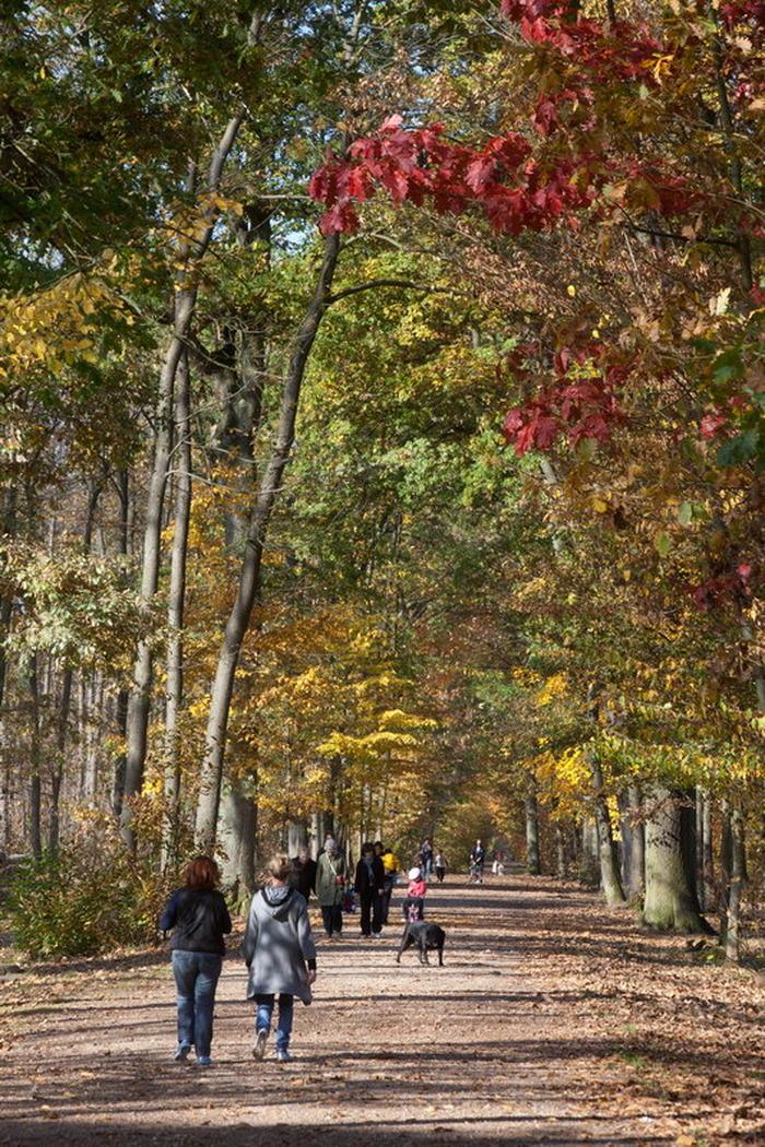 Journées du patrimoine 2018 - À la découverte de la forêt de Montmorency