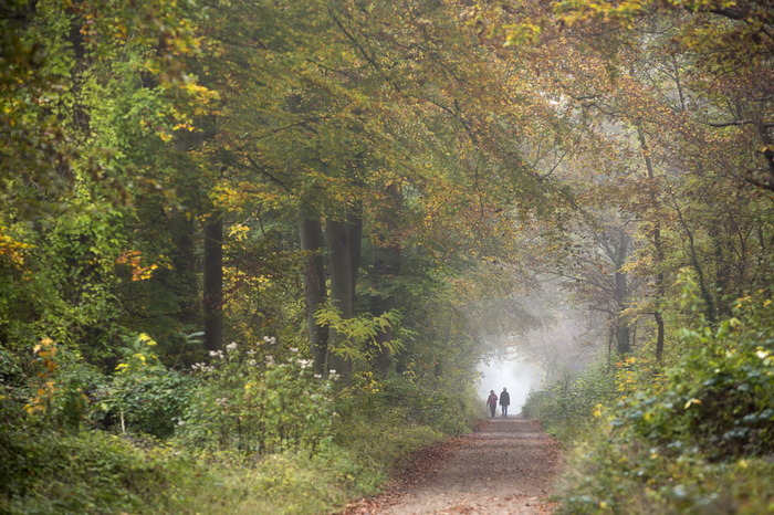 Journées du patrimoine 2018 - À la découverte de la forêt de Saint-Germain