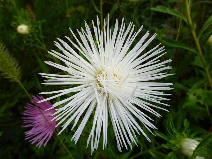 Journées du patrimoine 2018 - Atelier d'art floral à partir des végétaux des jardins et du potager.